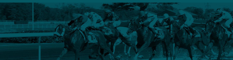 """Résultat de recherche d'images pour """"les decors pour un site de pmu chevaux"""""""